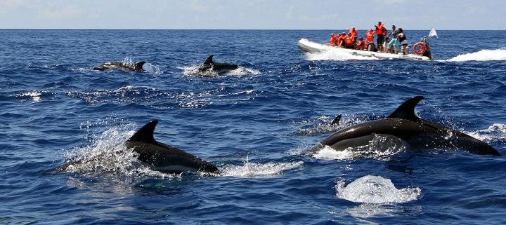 TOP Faro - Observação de Golfinhos