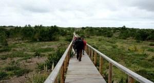TOP Aveiro - Reserva Natural das Dunas de São Jacinto