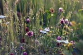 imagem flores jetshoots